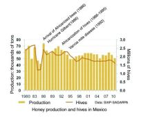 Honey production and hives in Mexico/ Image from Geo-Mexico.com