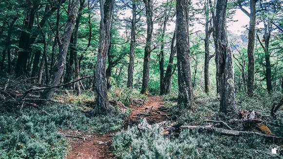 Passage dans les sous bois, Hielo Azul à El Bolson