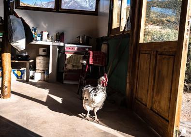Monte Hostcamp et ses poulets sociaux