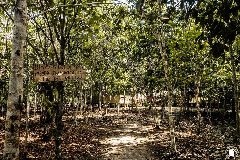 Campamento Shamanico Luz del Ayahuasca