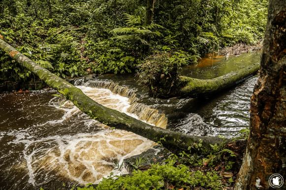 Cascade au cœur de la jungle amazonienne