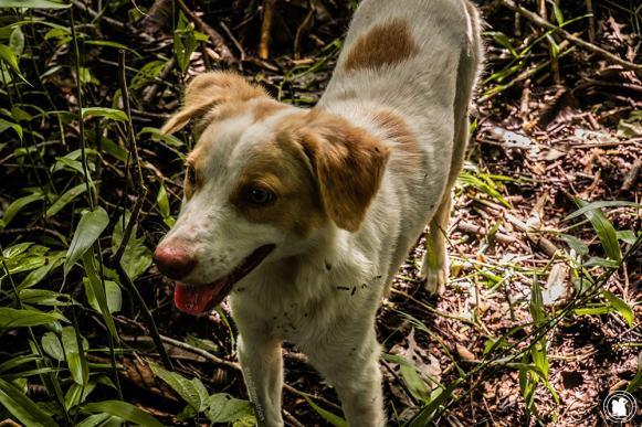 Le chien de Manual surnommé Dobbie