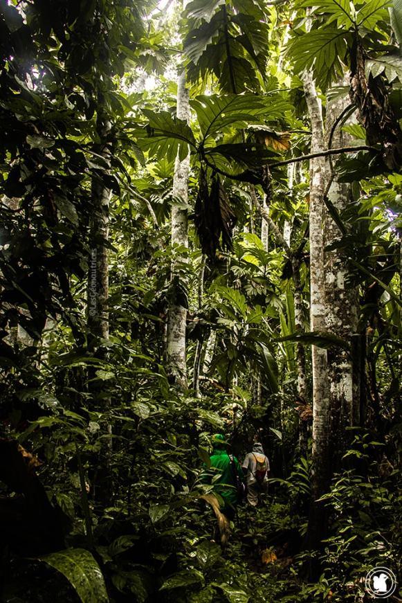 S'enfoncer dans la forêt amazonienne