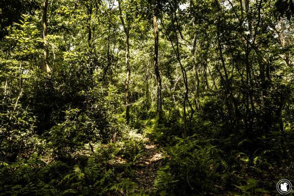 Parc national Chitwan jungle