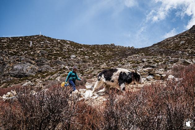 Trek des 3 cols - Une dame et son yak