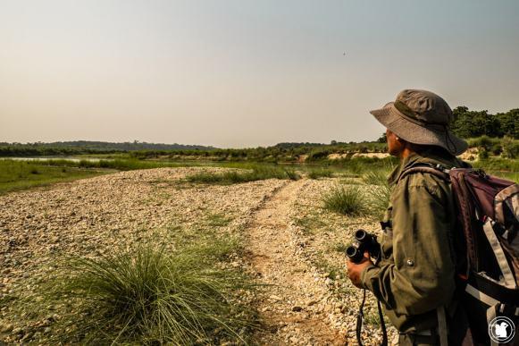 Guide jungle walk Chitwan