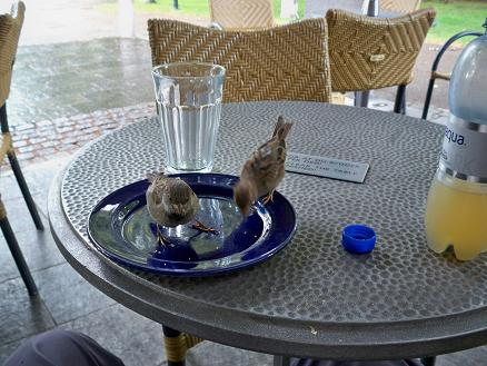 Aggressive birds at a cafe in Frogner Park clean the crumbs off my plate.