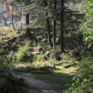 Meandering away from the church, down a little forest path that hugs the hillside, the main graveyard starts to emerge.