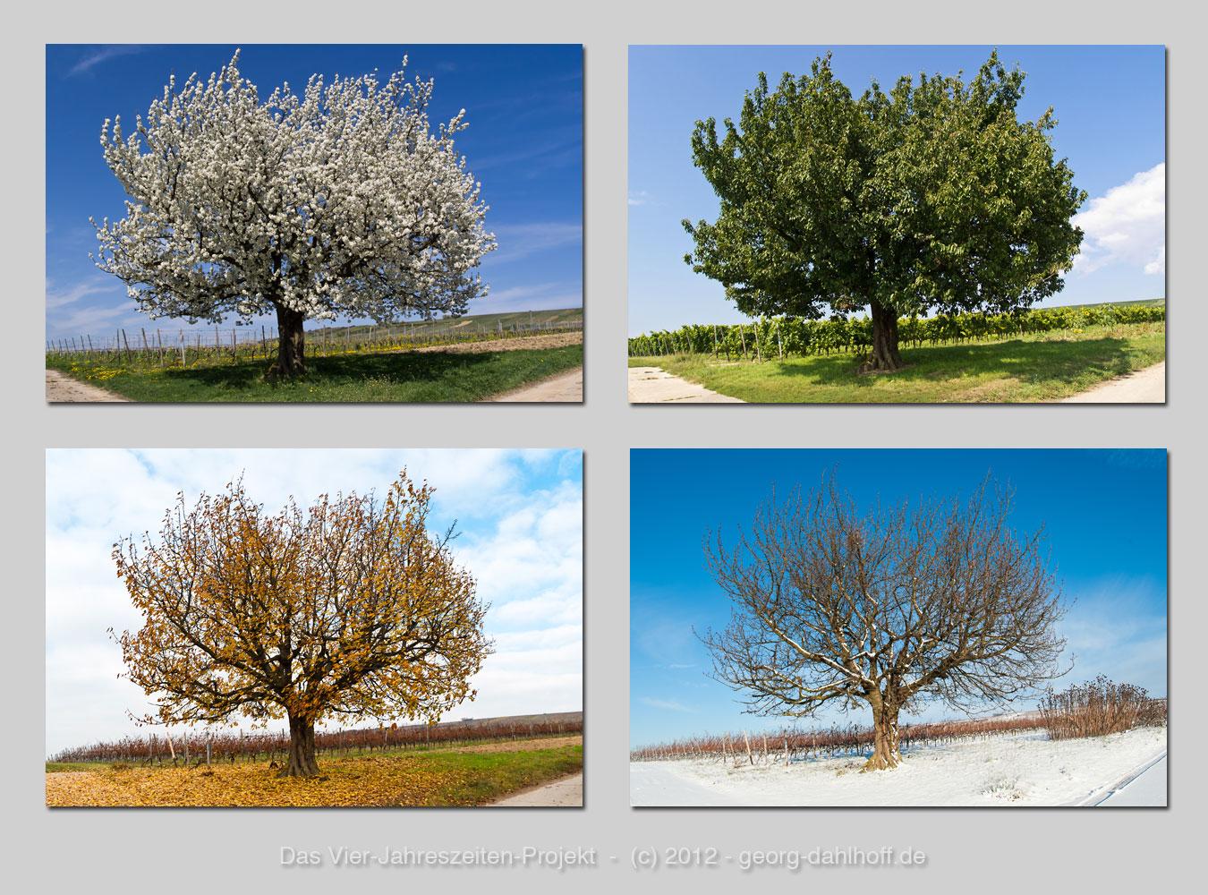 4 jahreszeiten bilder zum ausdrucken