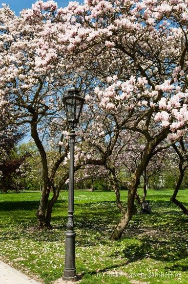 Biebricher Schlosspark - Bild Nr. 201304248640