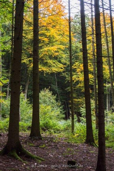 Wald am Donnersberg - Bild Nr. 201310131944