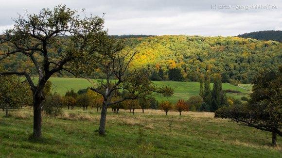 Landschaft am Donnersberg - Bild Nr. 201310131971