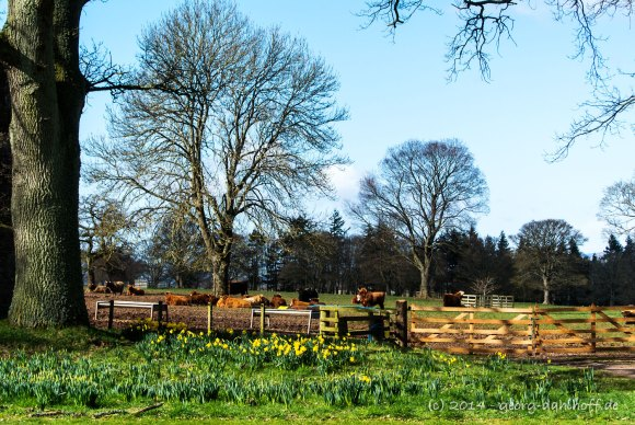 Im Park von Glamis Castle - Bild Nr. 201403232574