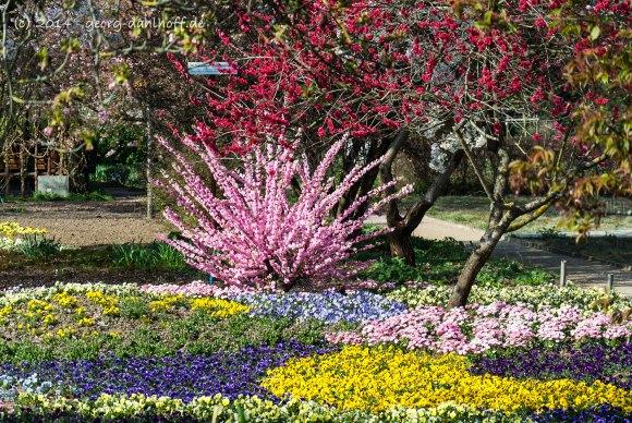 Botanischer Garten Uni Mainz - Bild Nr. 201404022695
