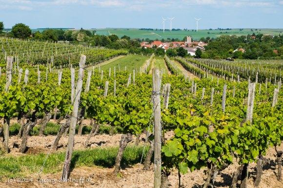 Ausblick auf Mommenheim - Bild Nr. 201405170452