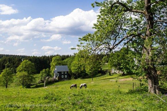 Im Thüringer Wald - Bild Nr. 201405260953