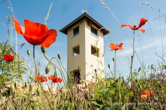 Wingertsturm und Mohn - Bild Nr. 201406083063