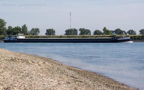 Auf dem Rhein bei Oppenheim - Bild Nr. 201407060955