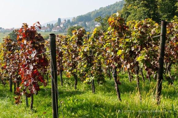 Blick von Villa Ludwigshöhe Richtung Weiher - Bild Nr. 201410031427