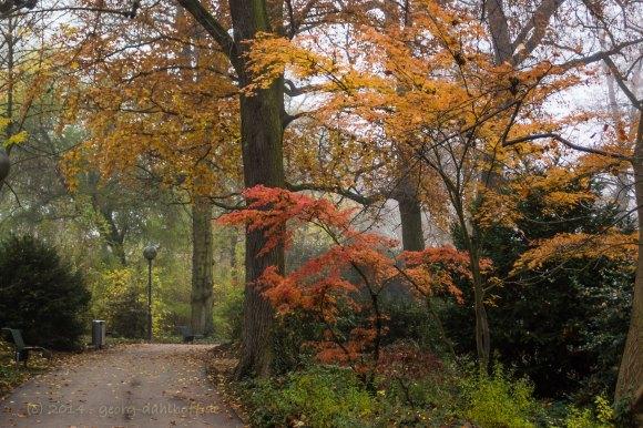 Stadtpark Mainz im November - Bild Nr. 201411231015