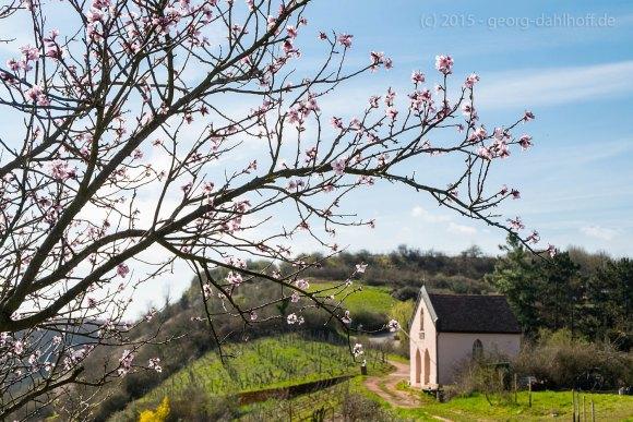 Mandelblüte und Bergkapelle - Bild Nr. 201504031877