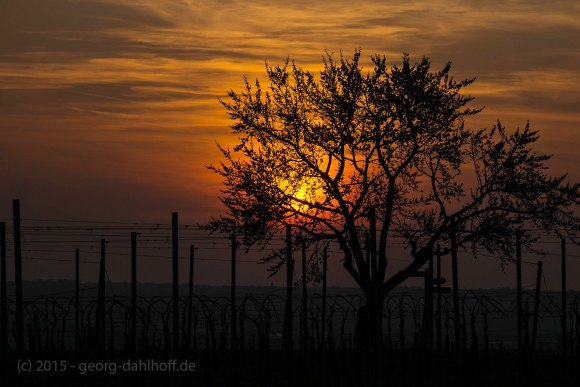 Sonnenuntergang - Bild Nr. 201504092013