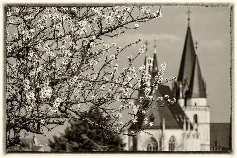 Mandelblüte nostalgisch - Bild Nr. 201603264157