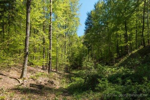 Im Wald am Eiswoog - Bild Nr. 201605084271