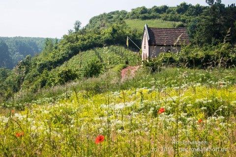 Blumenwiese an der Nackenheimer Bergkapelle - Bild Nr. 201605260279