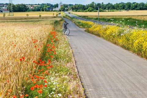 Radweg von Lörzweiler nach Mommenheim - Bild Nr. 201607094470