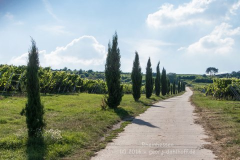 Ein Hauch von Toscana in Rheinhessen - Bild Nr. 201608150676