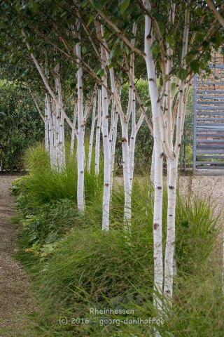 Binger Gärten 2016 - Bild Nr. 201608210726