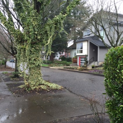 Ivy-covered tree trunks stand in contrast to an angular home in Sellwood.