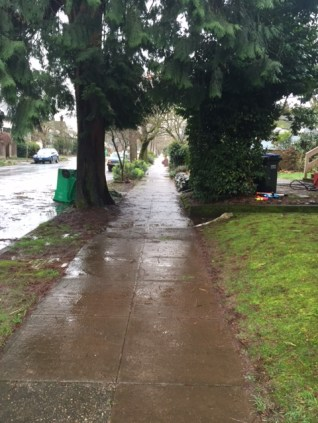 Rain-slicked sidewalks took nothing away from the beauty of the trees' natural arch.