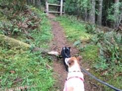 Hiking the Cascade Lake Trail on Orcas Island.