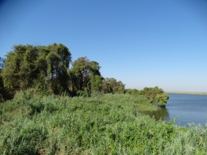 Chobe River habitat.