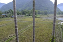 ricepaddywork2