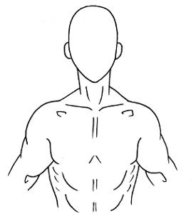 Male Torso Diagram Skeleton Diagram Wiring Diagram ~ Odicis