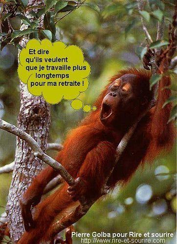 Image Drole De Singe Humour | HumourOp