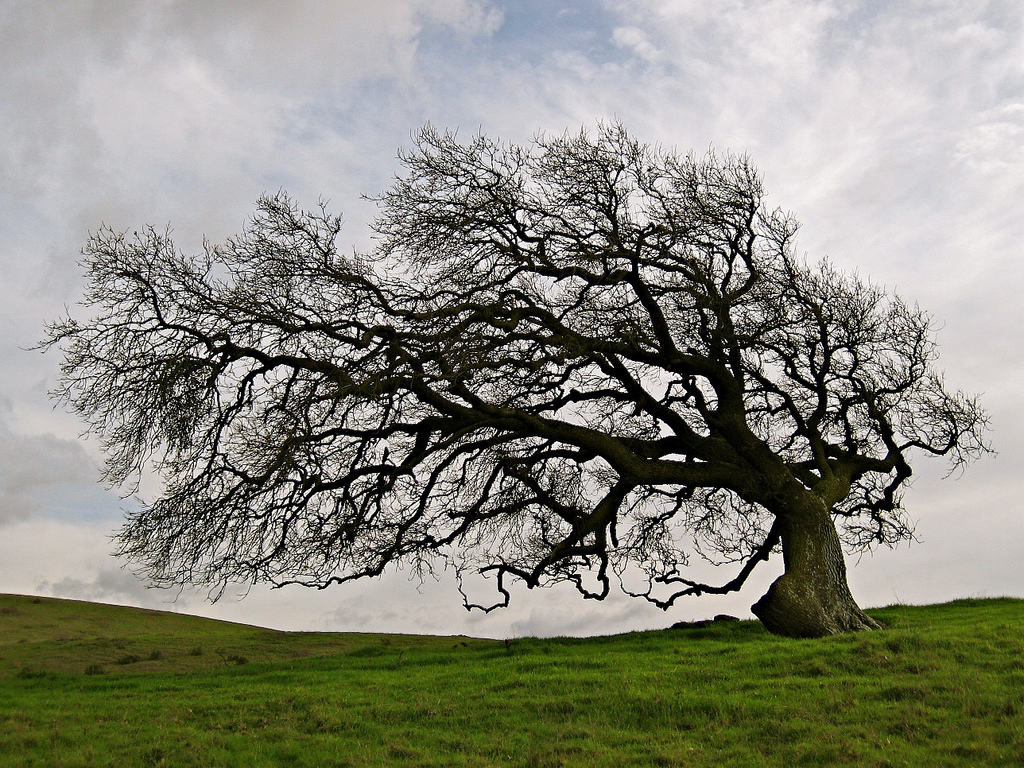 Trees in a field that has grown with the wind, and grew sideways