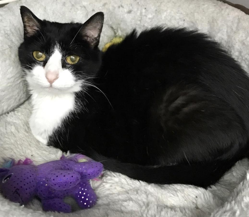 Georgetown Veterinary Hospital Cat- Molly