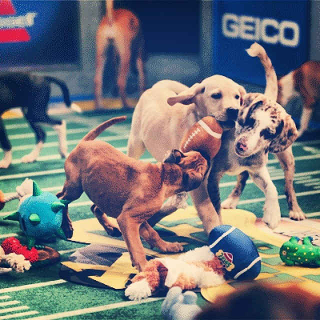 Puppy Bowl XIII: The Biggest Winner Was America