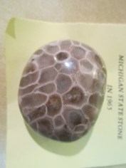Polished beauty of a Petoskey stone. You can make out the hexagon chambers perfectly. In 1965 it was name the official Michigan State stone.