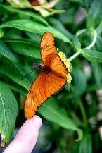 Butterfly-finger