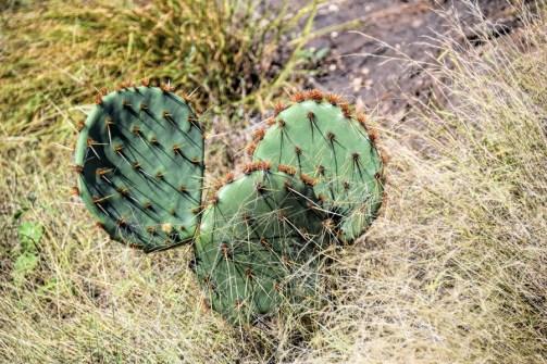 Cactus-green