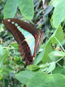 butterflies in the garder
