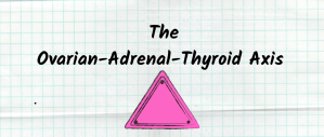 THE OVARIAN-THYROID-ADRENAL AXIS