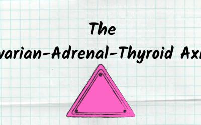The Ovarian Adreanal