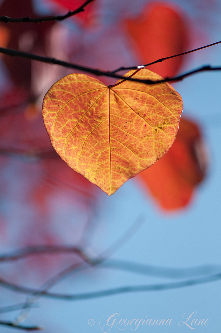 Fall Of The Leafe Wallpaper Autumn Love