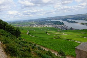 Thousands of grapevines, with Rudesheim in the background